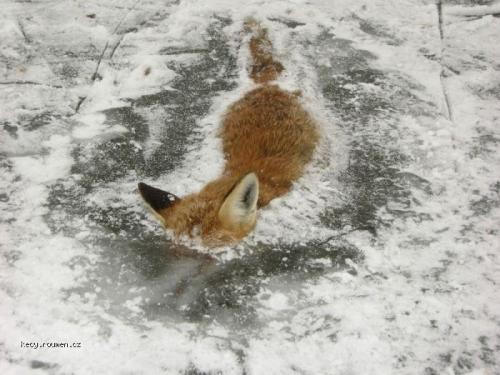 frozen firefox