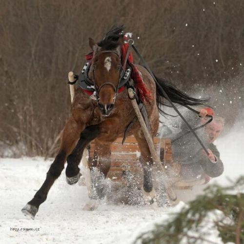 horse drifting