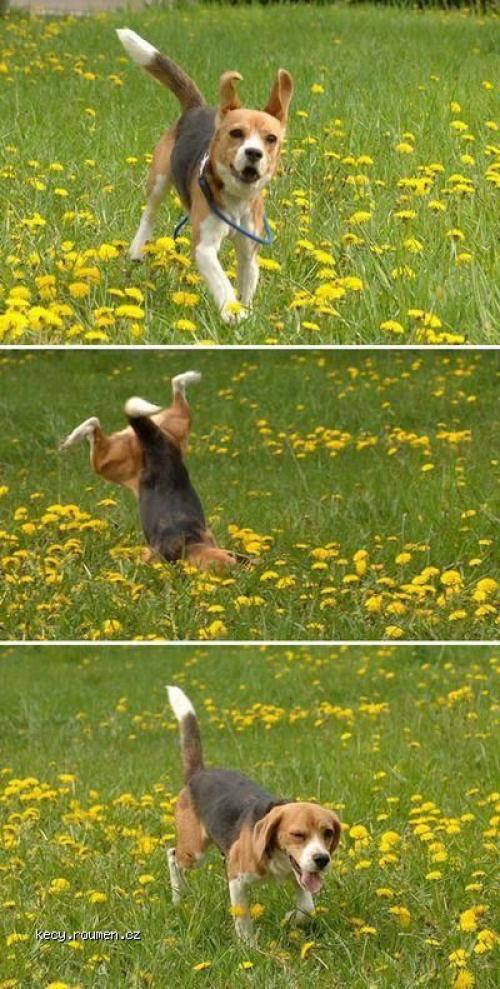 psi drzkopad