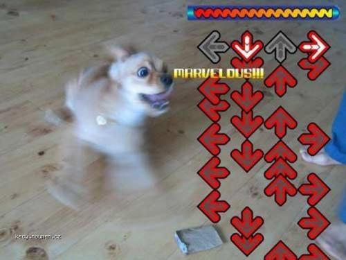 dance dance stupid dog