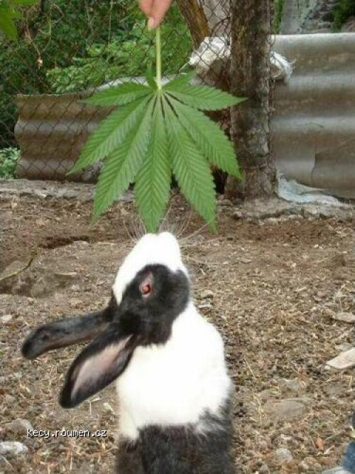 Drug Rabbit