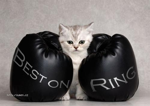 best on ring