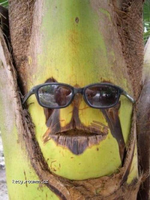 tropical dude