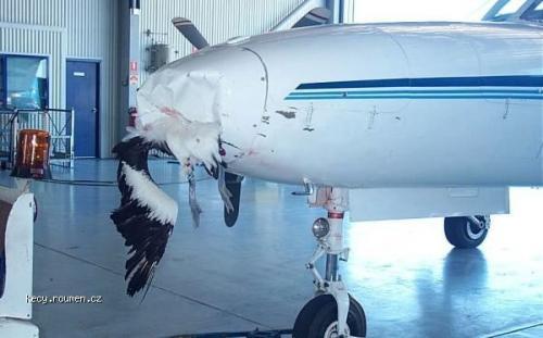 pelican crash