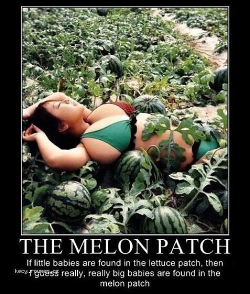The melon patch
