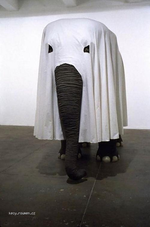 KKK Elephant