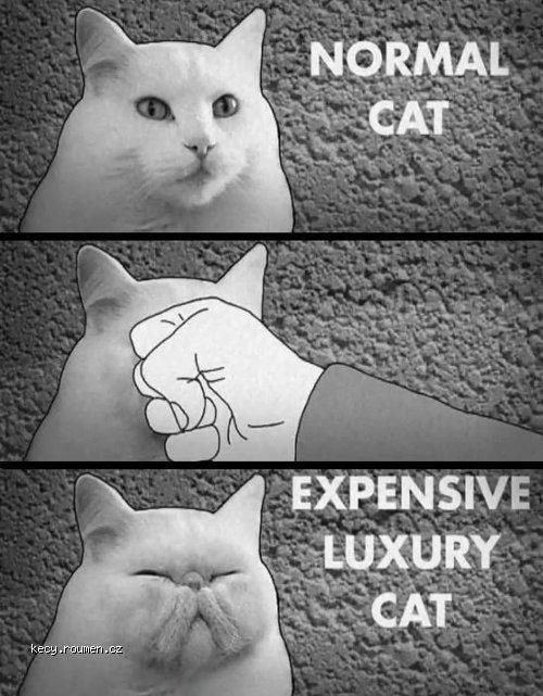 expensive luxury cat