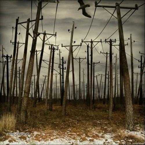 Erik Johannson Strange forest