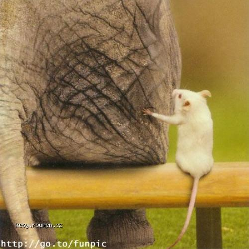 Animal mouse and elephant