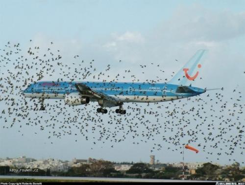 ptaci atak