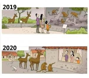 Koronavirus - 2019 vs 2020