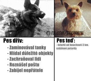 Pes dřív vs. pes teď
