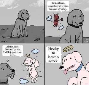 Pravda o psech