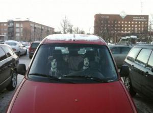 Psí řidiči