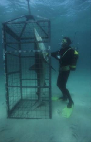Žralok v kleci