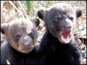 Zvláštní medvídci