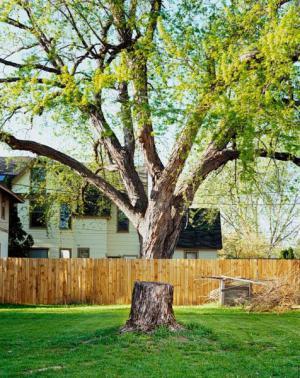 Stromová iluze