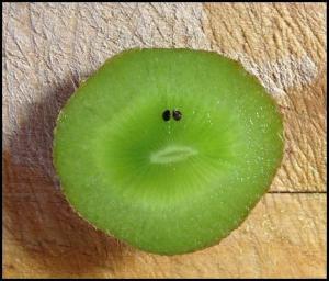 Chudé kiwi