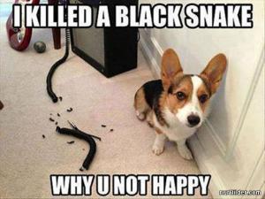 Zabil jsem hada