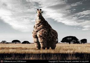 KFC žirafa