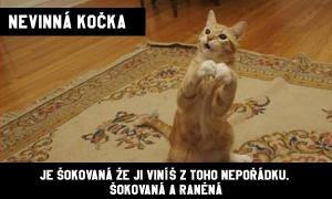 Nevinná kočka