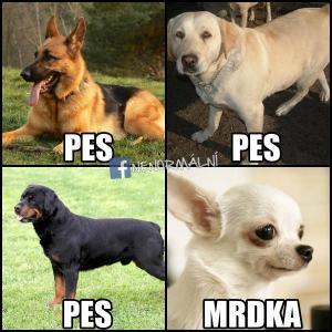 Rozdíl ve psech