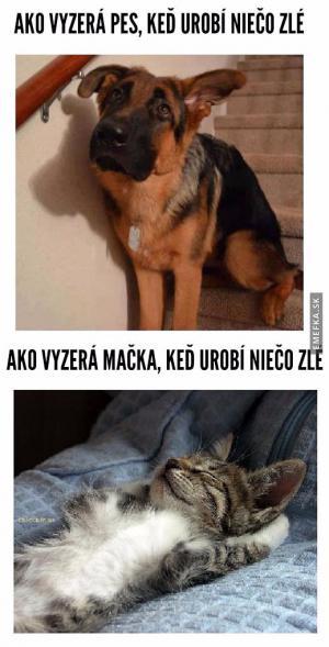 Když něco pes udělá
