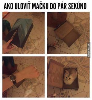Jak ulovit kočku