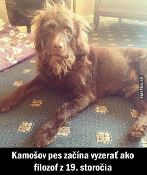 Kámošův pes