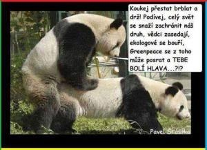 Panda brblá?