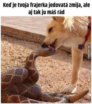 Jedovatá zmije