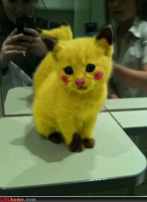 Pikachu číča