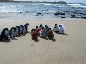 Tučňáčí svatba