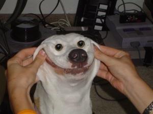 Psí úsměv