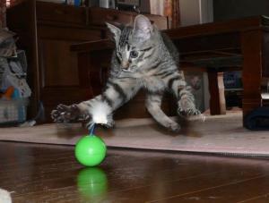 Kočičí momentka