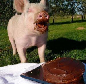 Prase a dort