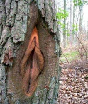 Paní stromová