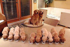 Rodinka
