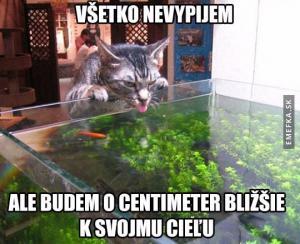 Kočka má svůj cíl!