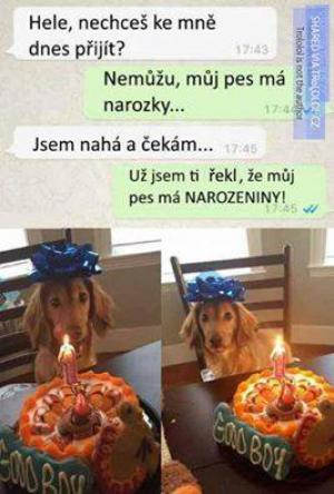 Pes má narozky