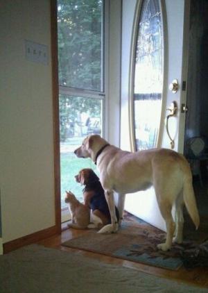 Psi vyhlížejí páníčka
