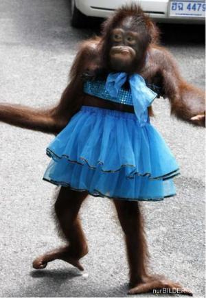 Šaty pro šimpanze