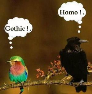 Ptačí názory