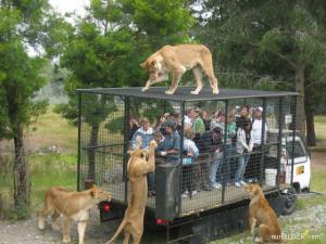 Lvi x lidi v kleci