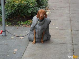 Zimní bunda pro psa