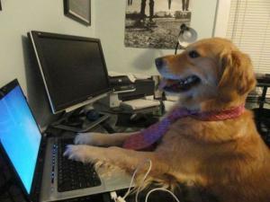 Pes úředník