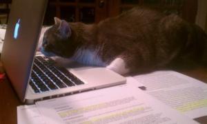 On-line kočka