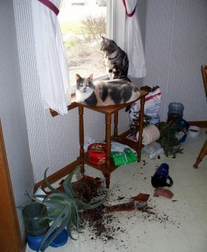 Kočičí pořádek