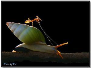 Mravenec ovládá šneka