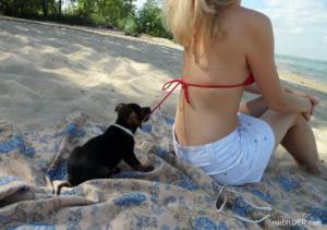 Pes pomocník